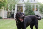 Dog Friendly Relais and Chateaux